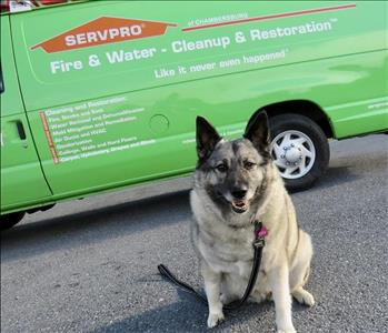 A brown and black female dog in front of the SERVPRO Van