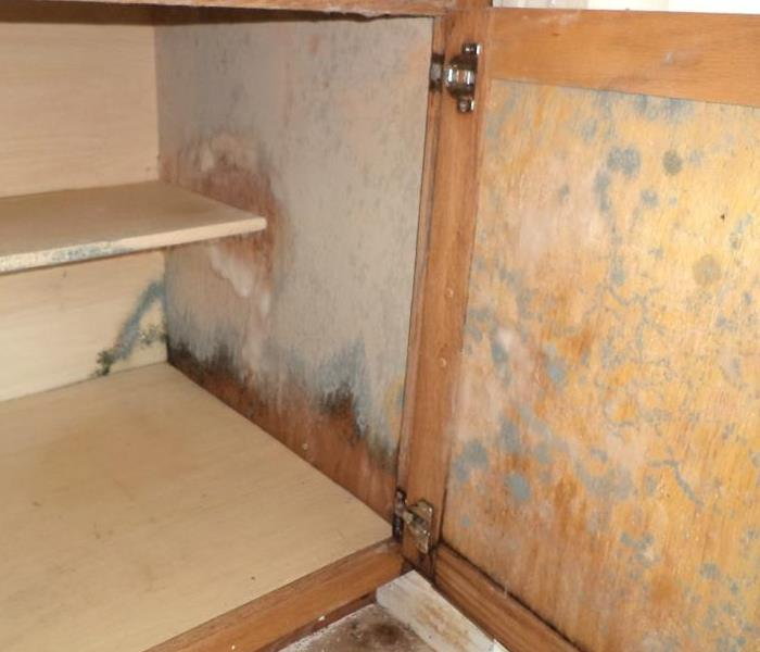 Mold Remediation The Correct Way to Handle Chambersburg Mold Damage