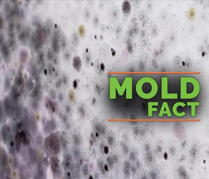 Mold Remediation Oh no, I have mold now what?